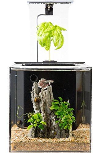 EcoQubeC Aquarium - Desktop Betta Fish Tank