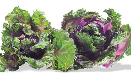 Viridis Hortus - 30 x Kalettes Formerly Known as Flower Sprout Petit Posi Brand New Vegetable Seeds