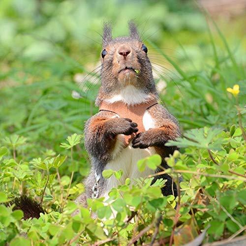 Pet Squirrel Vest Harnesses Separate Anti-bite Traction Rope Collars- Snow / Devil Squirrel Pet Training Belt Split Tractor, Pet Rat Hamster Leashes, Flexible Tie Lead Leash Rope Harness (Coffee)