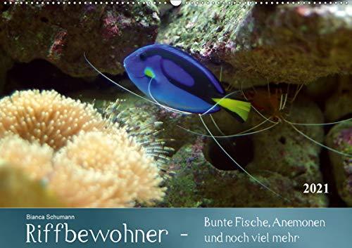 Riffbewohner - Bunte Fische, Anemonen und noch viel mehrAT-Version (Wandkalender 2021 DIN A2 quer)