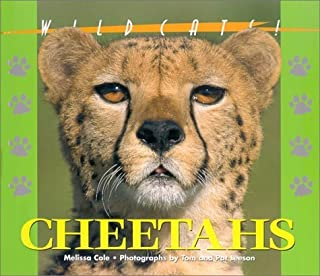 Best cheetah 26 wildcat Reviews