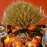 HUAESIN 100pcs Getrocknete Weizen Natürliche Trocken Weizen Deko Weizenstrauß Weizen Getrocknete Blumen für Hochzeit Mittelstücke Zuhause Balkon Party Tisch Vase Deko 40cm - 2