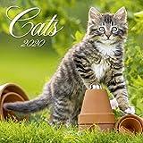 Cats 2020: Broschürenkalender mit Ferienterminen. Katzen und Kätzchen. 30 x 30 cm