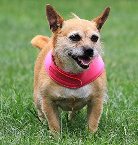 Kühlender Hund Bandanna-Halten Sie Ihren Hund cool in diesem Sommer-Reversible für 2 Farben-Handmade In UK-Einstellbarer Näher-Klein Silber/Rosa