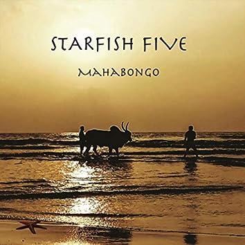 Starfish Five