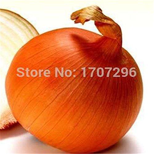 Frais Golden Delicious Onion Graines de légumes - 10 pcs / lot
