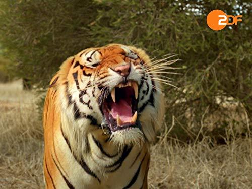 Auf der Suche nach dem indischen Tiger