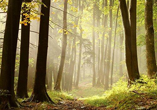 wandmotiv24 Fototapete Wald-Weg M 250 x 175 cm - 5 Teile Fototapeten, Wandbild, Motivtapeten, Vlies-Tapeten Natur, Sonne, Dämmerung, Bäume M0024