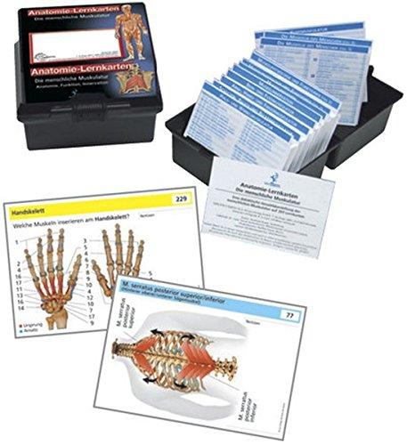 Die menschliche Muskulatur: Anatomie-Lernkarten Anatomie, Funktion und Innervation