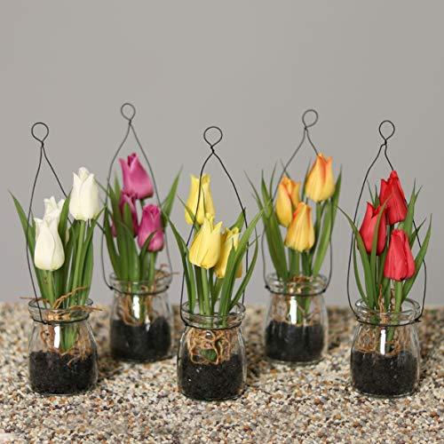 mucplants 6X künstiche Tulpen im Glastopf 18cm (2X Creme, 1x gelb, 1x Fuchsia, 1x rot, 1x orange) zum Stellen oder Hängen Tischdekoration Kunstblume Frühlingsdekoration Seidenblumen