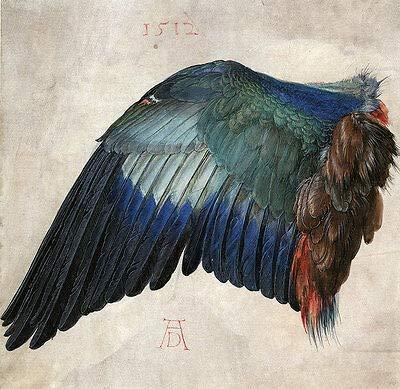 Kunstdruck Flügel Einer Blauracke Albrecht Dürer Vogel Jagd Tierstudie H A3 0344