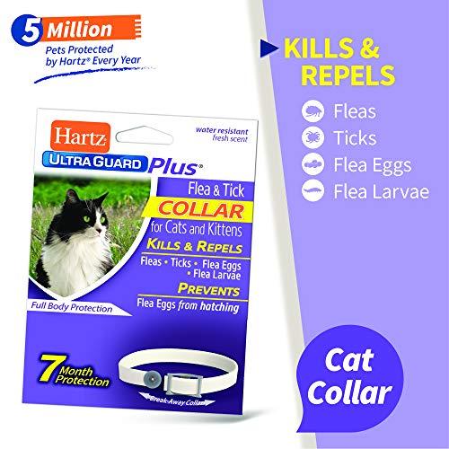Hartz UltraGuard Plus Water Resistant 7 Month Protection Breakaway Flea & Tick Collar for Cats (3270094268)