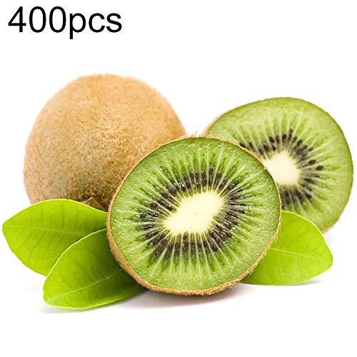 Walkretynbe 400Pcs Kiwi Seeds Actinidia Bonsai Delicious Fruit Tree Plant Home Garden Decor para El Hogar Semillas de Kiwi