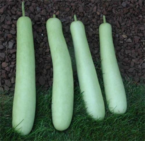 gourde comestible extra longues (légumes asiatiques) Gourd Graines aKa BHGP
