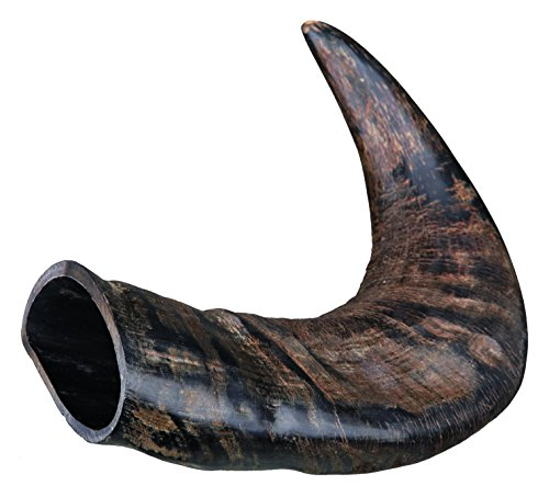 TX-27742 Buffalo Chewing Horn medium