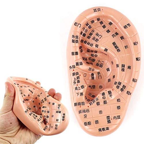 FHUILI Ear Zone Modell - Human Akupunktur Modell - 18Cm Ohrakupunktur Modell - Ohrreflexzonen-Massage-Modell - für das Lernen Menschlichen Acupoint Druckpunkt und Meridiane