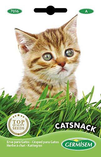 Germisem Catsnack Semillas de Hierba para Gatos 10 g, EC7016