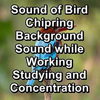 Sound of Bird Chipring Background Sound while Working Studying and Concentration