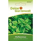 Pfefferminze Samen (Mehrjährig) | Pfefferminzsamen | Saatgut für Pfefferminze-Pflanzen |...