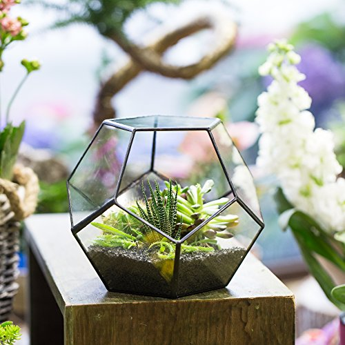 Black Glass Geometric Terrarium Container Modern Tabletop Window Sill Decor Flower Pot Balcony Planter Diy Display Box for Succulent Fern Moss Air Plants Miniature Fairy Garden Gift (No Plants)