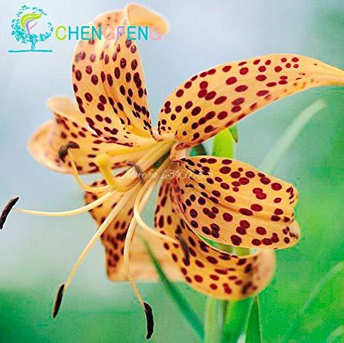 Green Seeds Co. 50 Pcs/Sac Plantes En Pot Lily plantes rares Plantes D'Intérieur Bonsaï Diy plante Semillas Mixed Colors emballage 2016: Brun