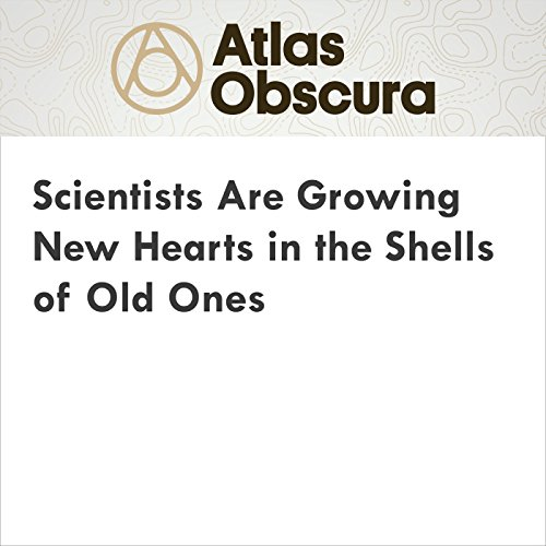Scientists Are Growing New Hearts in the Shells of Old Ones audiobook cover art