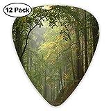 Forêt d'automne brumeuse avec arbres ombragés Scène boisée rêveuse brumeuse (paquet de 12)