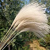 ARONTOME Flores de hierba de pampa, tamaño grande, 10 unidades de 55 cm, flores secas blancas, plantas naturales, para decoración de Navidad del hogar, boda