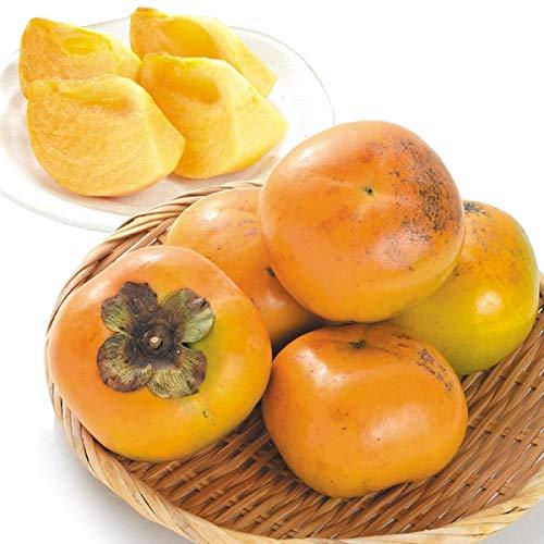 国華園 福岡産 太秋柿 4kg 1箱