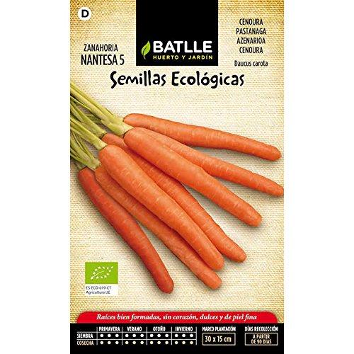 Semillas ecológicas de Zanahoria nantesa 5