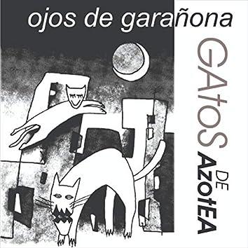 Ojos De garañona (Gatos De Azotea)