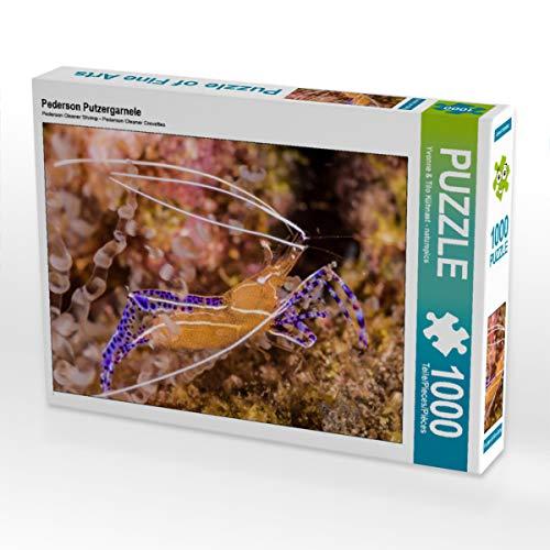 CALVENDO Puzzle Pederson Putzergarnele 1000 Teile Lege-Größe 64 x 48 cm Foto-Puzzle Bild von NaturePicsFilms