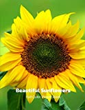 Beautiful Sunflowers Full-Color Picture Book: Sunflower Picture Book for Children, Seniors and Alzheimer's Patients -Wildflowers Nature