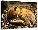 Schlafender Fuchs im Wald Format:80x60 cm Bild auf Leinwand
