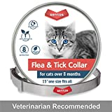 Flea Collars Works - Best Reviews Guide