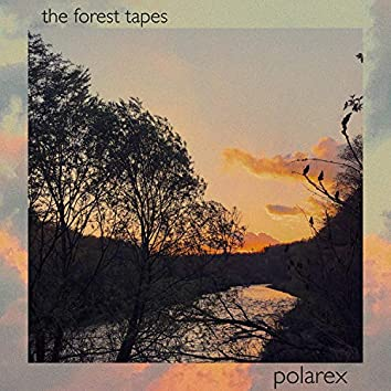 The Forest Tapes