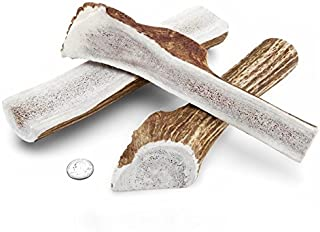 Mountain Dog Chews -Large Split Elk Antler Dog Chew [8 inches & 10 Oz.] Long-Lasting Natural Chew Bone for Large Dogs