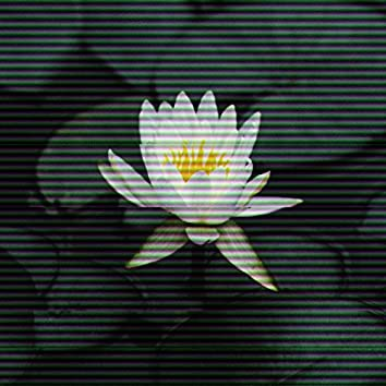 Lotus (feat. Aaron Rennel & Bill$up)