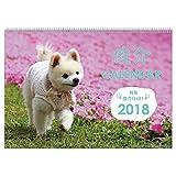 アートプリントジャパン 2018年 俊介カレンダー No.022 1000093355
