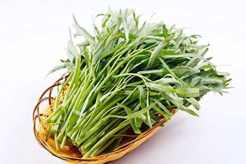 Wasserspinat (Ipomaea Aquatica) - 10 Samen - Sehr gutes Gemüse aus Asien