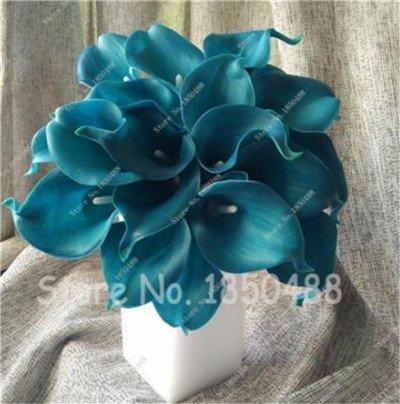 Multi-couleur Calla Fleur vrai Calla Lily Graines d'amour élégant Noble Symbolise Graines de fleurs de plantes d'intérieur Bonsai Balcon Fleur-50 9