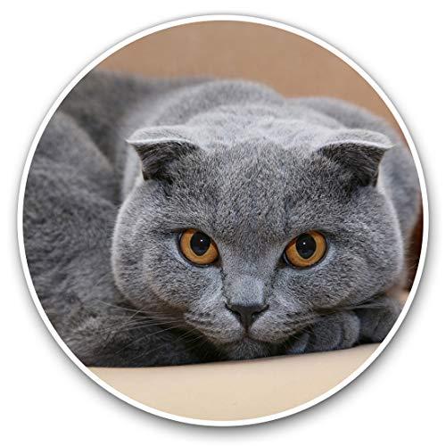 Impresionantes pegatinas de vinilo (juego de 2) 7,5 cm – azul gris escocés plegable gato calcomanías divertidas para portátiles, tabletas, equipaje, libros de recortes, neveras, regalo fresco # 12677, 25 cm