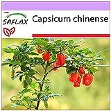 SAFLAX - Chile habanero red antilles - 10 semillas - Capsicum chinense