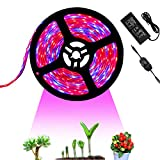 Tesfish 12V LED Plant Grow Light Strips 5M with Power Adapter and Dimmer, Indoor Growing Lights Waterproof Full Spectrum SMD 5050 Red Blue 4:1 for Indoor Plants Greenhouse Aquarium Hydroponic Plant