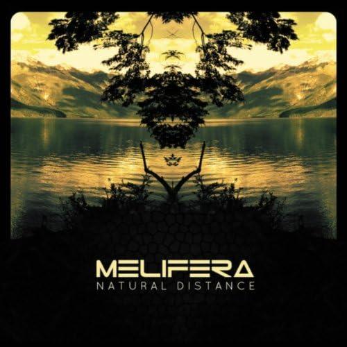 Melifera