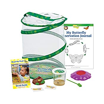 Insect Lore Butterfly Garden  Original Habitat and Live Cup of Caterpillars with STEM Butterfly Journal – Life Science & STEM Education – Butterfly Kit