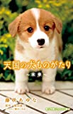 天国の犬ものがたり~未来~ (小学館ジュニア文庫)