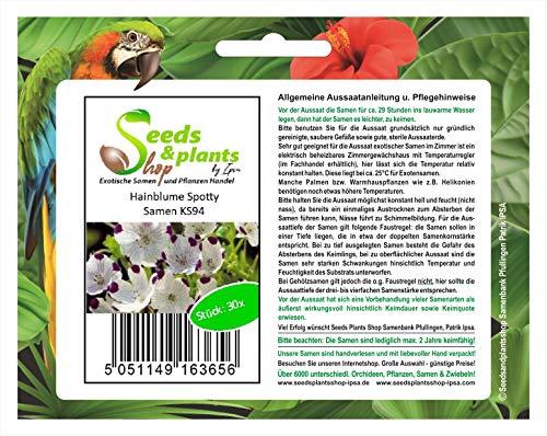 Stk - 30x Hainblume Spotty - Nemophila maculata Samen Garten Blume Saatgut KS94 - Seeds Plants Shop Samenbank Pfullingen Patrik Ipsa