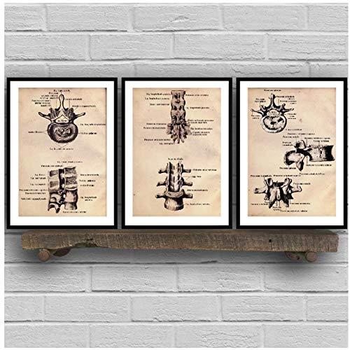 BINGJIACAI Columna vertebral Anatomía Carteles antiguos Impresiones en lienzo Guía de terapia Ilustración anatómica Pintura Imagen de arte de pared médica Decoración de oficina-40x50cmx3 Sin marco