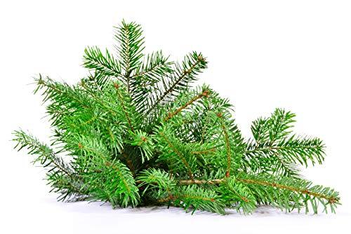pille baumschulen frisches Tannengrün Nordmanntanne Schnittgrün echte Tannenzweige Handbund Advent Verschiedene Kilo Bunde verfügbar (2,50 kg)